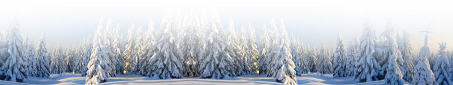 waater weihnachtsb ume j chen m nchengladbach weihnachtsbaum g ssing. Black Bedroom Furniture Sets. Home Design Ideas